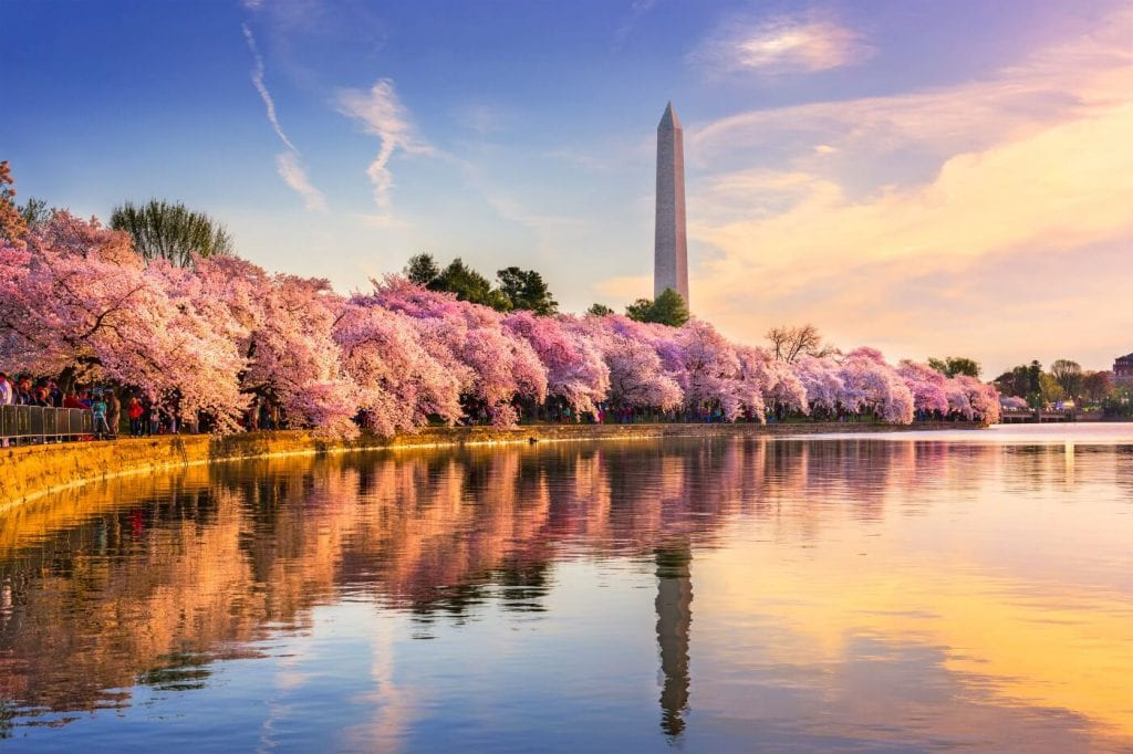 Image of tidal basin in Washington, DC