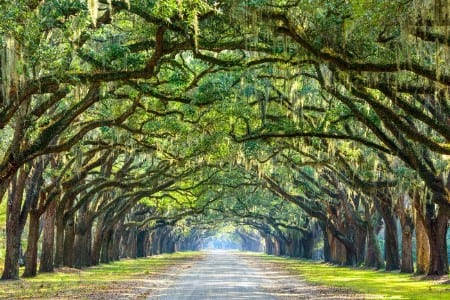 Scenic view of trees with Spanish moss growing